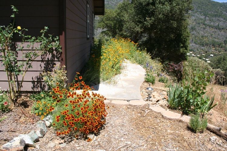 Rusty Plains Coreopsis and Rudbeckia