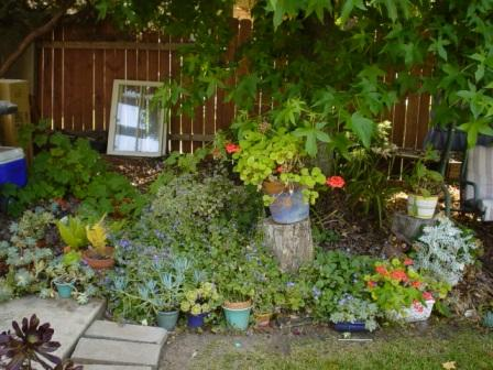 Pots of succulents in Fullerton