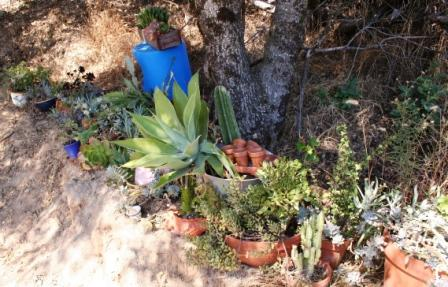 Storing the succulents under the trees