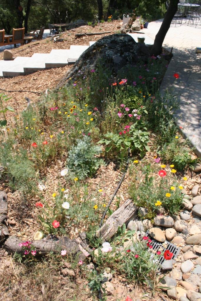 Western wildflower mix in June 2006