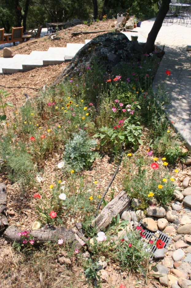 Western wildflower mix in June 2006