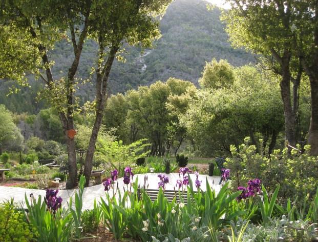 Garden 2008