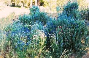 Memorial Day wildflowers