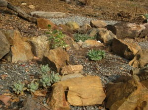 The rock garden along the gravel path