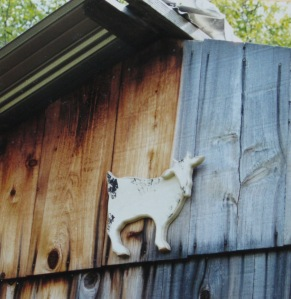Goat for the goat shed