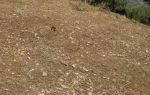 Dead filaree sprouts