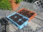 Test ponypaks of seeds