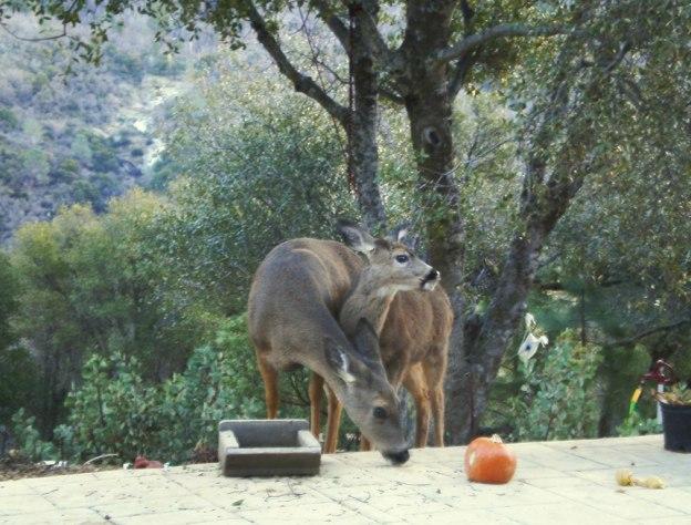 Two deer find the birdseed