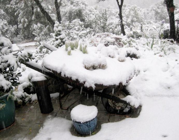 Snow on the wheelbarrow