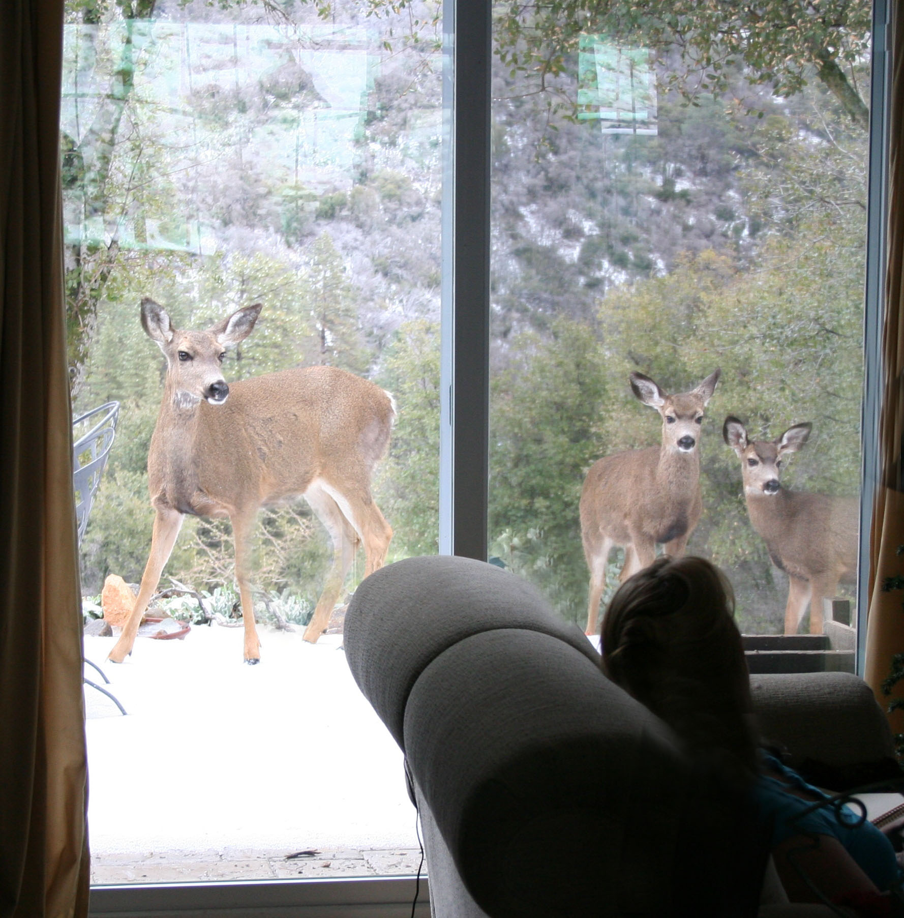Three deer out the window