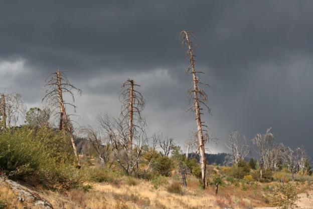 stormy wednesday