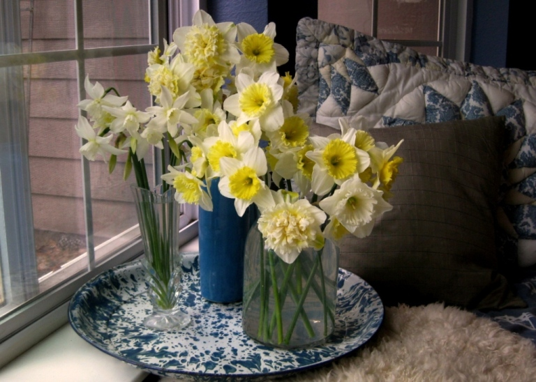 Daffodils cut and brought in before the storm. 'Ice Wings' in small glass vase.