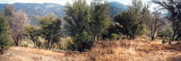 Looking from where the house would soon stand; what we started with. Notice poison oak whips in foreground.