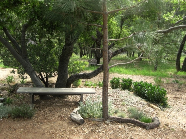 The tree trunk provides the back rest for this bench, where you can sit and hand water in summer.