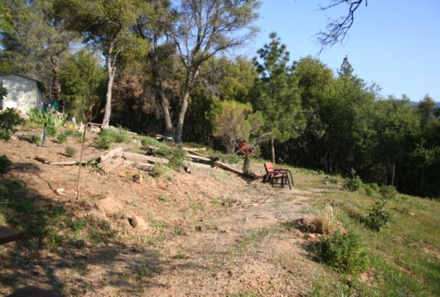 Cleared buffer area, now the CA native and salvia garden, looking toward the forest