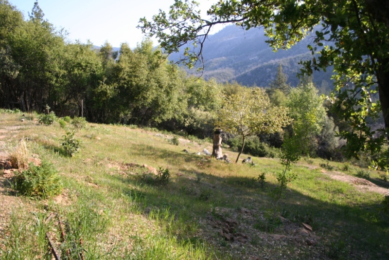 Groomed meadow. Yerba Santa is trimmed, poison oak removed, deer grass added.