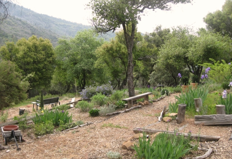 Three levels, from right, cultivated Mediterranean and native plants, below path, introduced natives and beyond the bench, natural