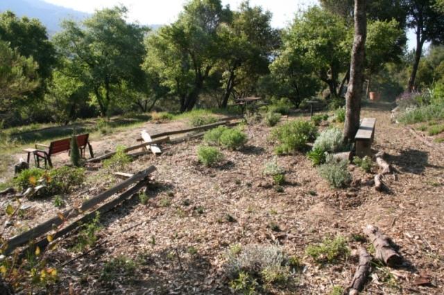 2008-Planting under oaks