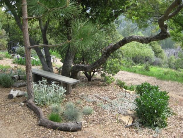 2009-Planting under oaks5