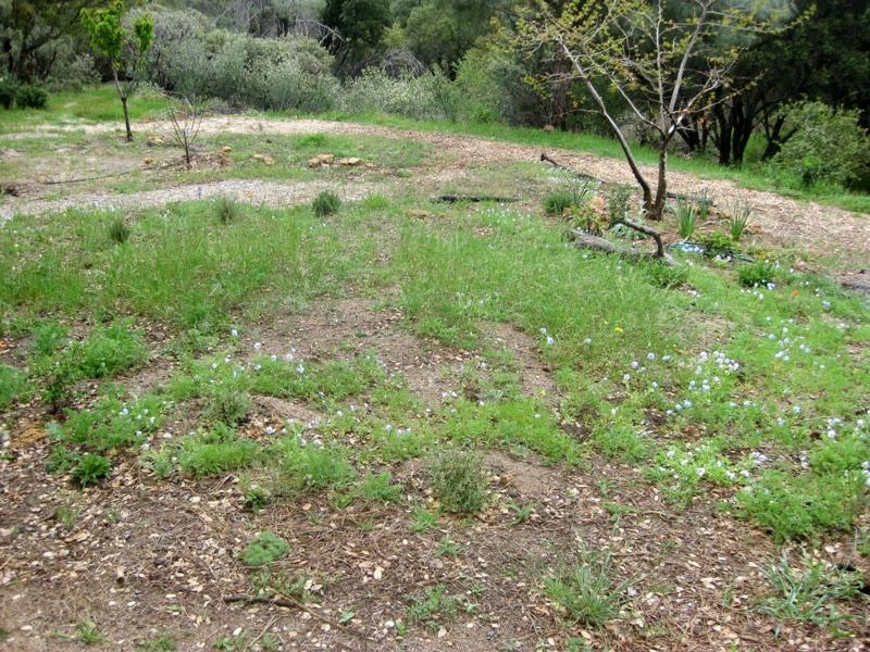 2011-4-20 April Meadow