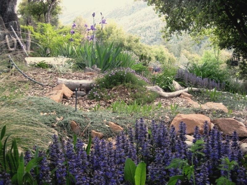Mays Garden: Tried And True Deer-resistant Plants For The Sierra