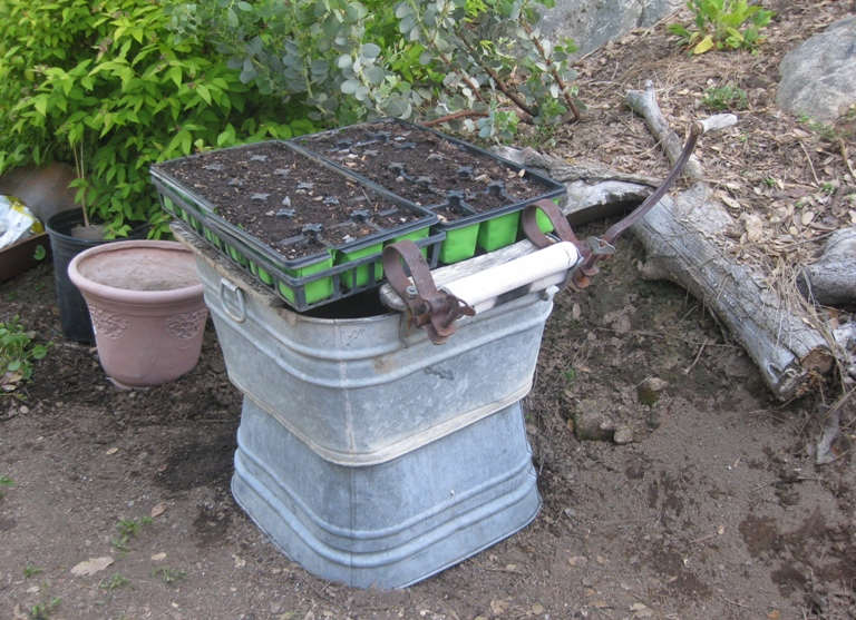 During all this was found, a home for my seedling trays, possibly