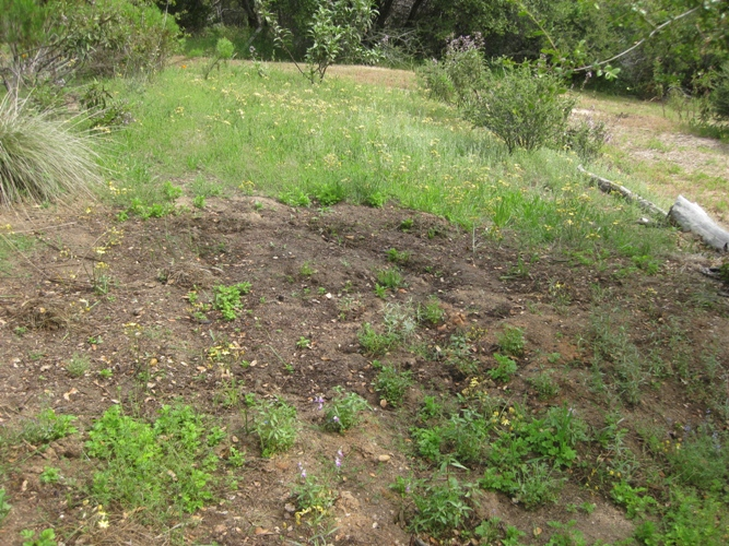 This is the natural meadow, half of it weeded