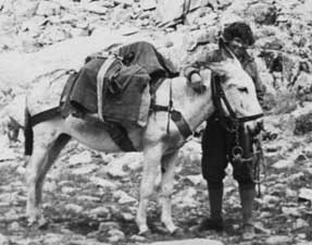 After her car could go no higher, Lester Rowntree would be accompanied by burro or mule.