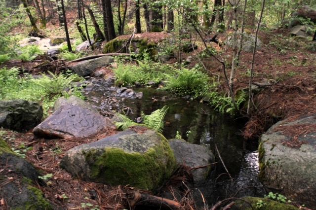 Lewis Creek eddy