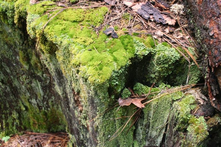 Lewis Creek moss rock
