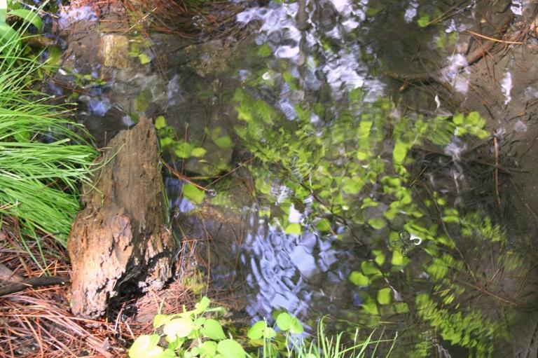 Lewis Creek pond
