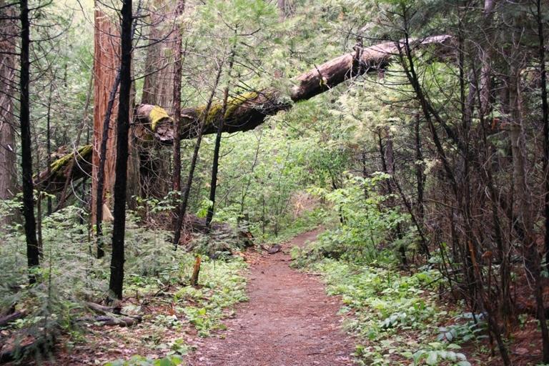 Lewis Creek Trail heads under a tree