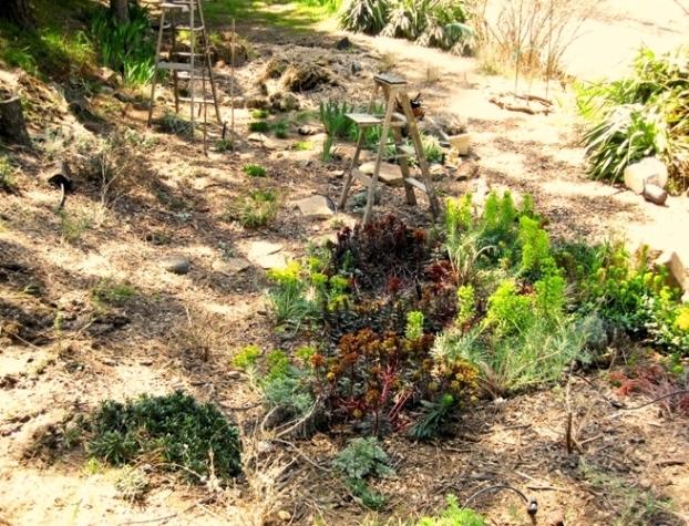 Cheryl's Euphorbia Garden