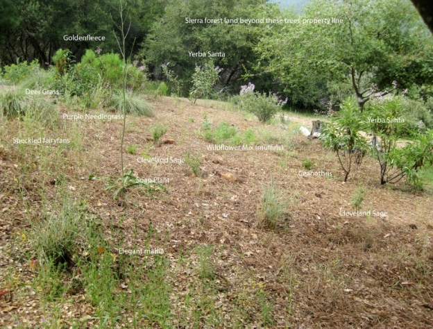 East meadow- weeded and mulched with pine straw