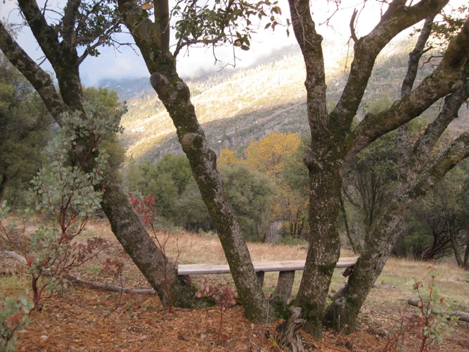 View from bench-in-a-tree, looking onto Peckinpah Ridge