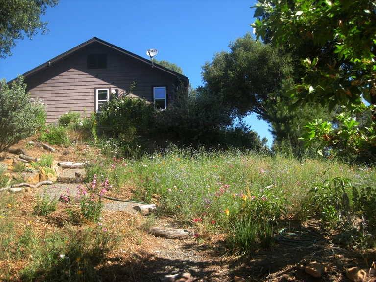 Meadow and steps toward house