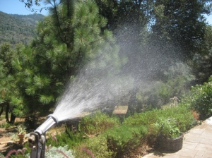Handwatering is fun for awhile