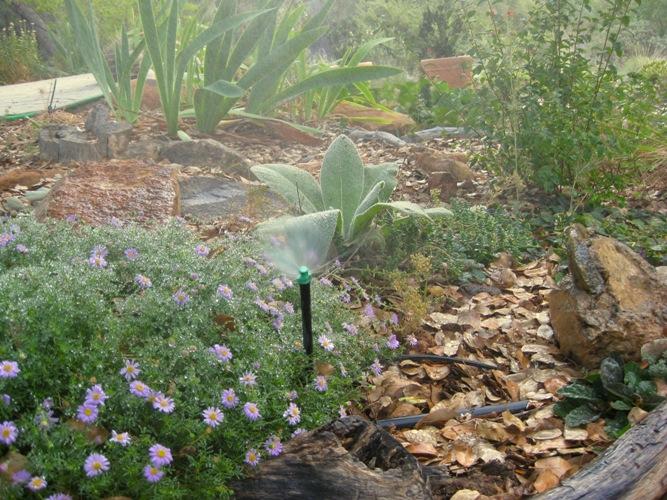 Watering Ca Native Plants In The Sierra Foothills Sierra