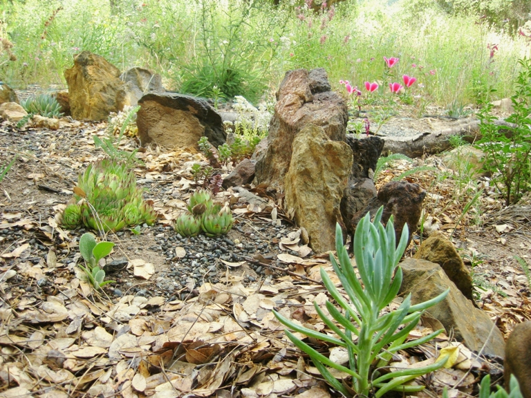 Landscaping Rocks Vallejo Ca : A new zealand inspired california rock garden sierra foothill