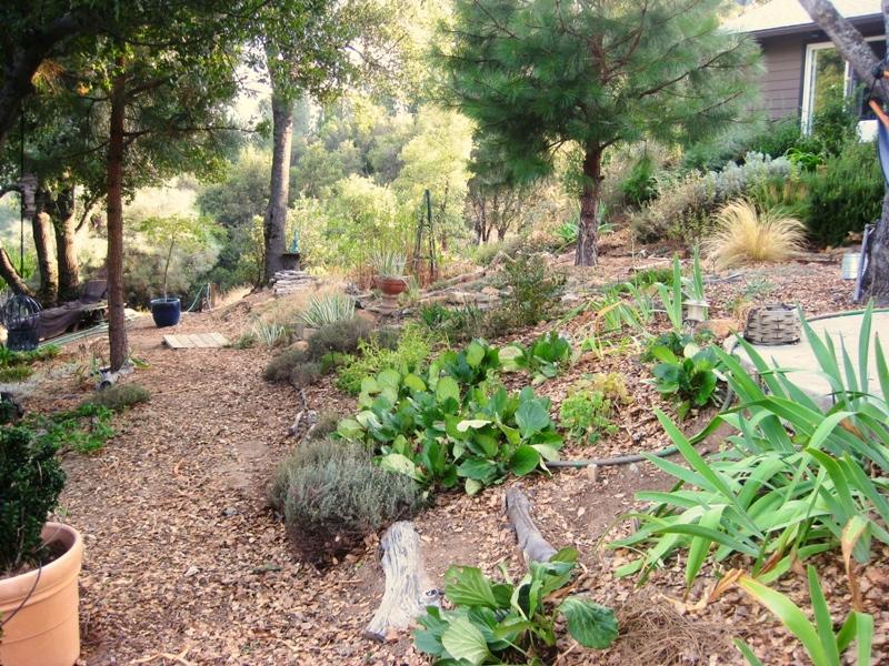 Path view through the garden