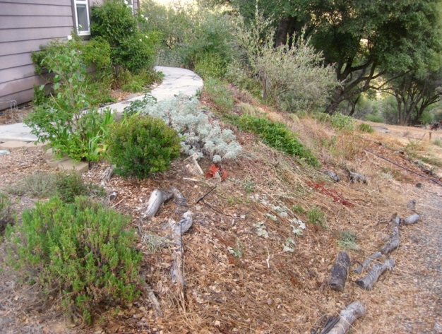 Mulched bank, needs planting, something for dry shade.