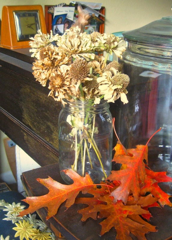 These leaves are from a Black oak, perfect for preserving