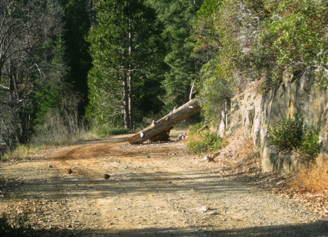 Either the Park service or private citizens cut trees that cross the road