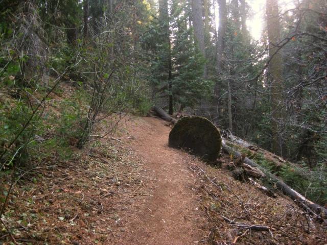 Fallen tree on the trail