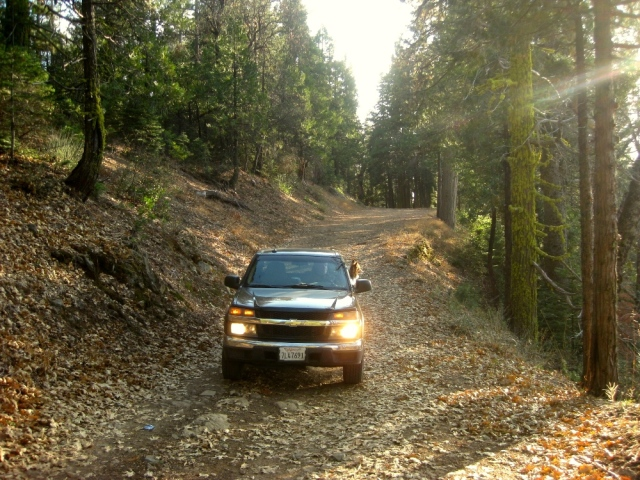 Love there pine needle covered dirt roads