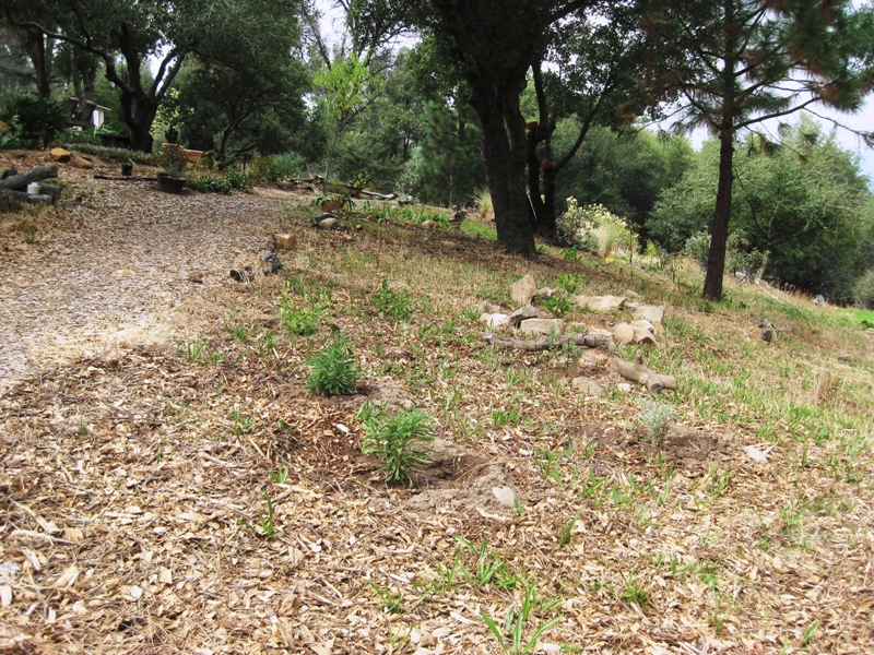 New all native planting area