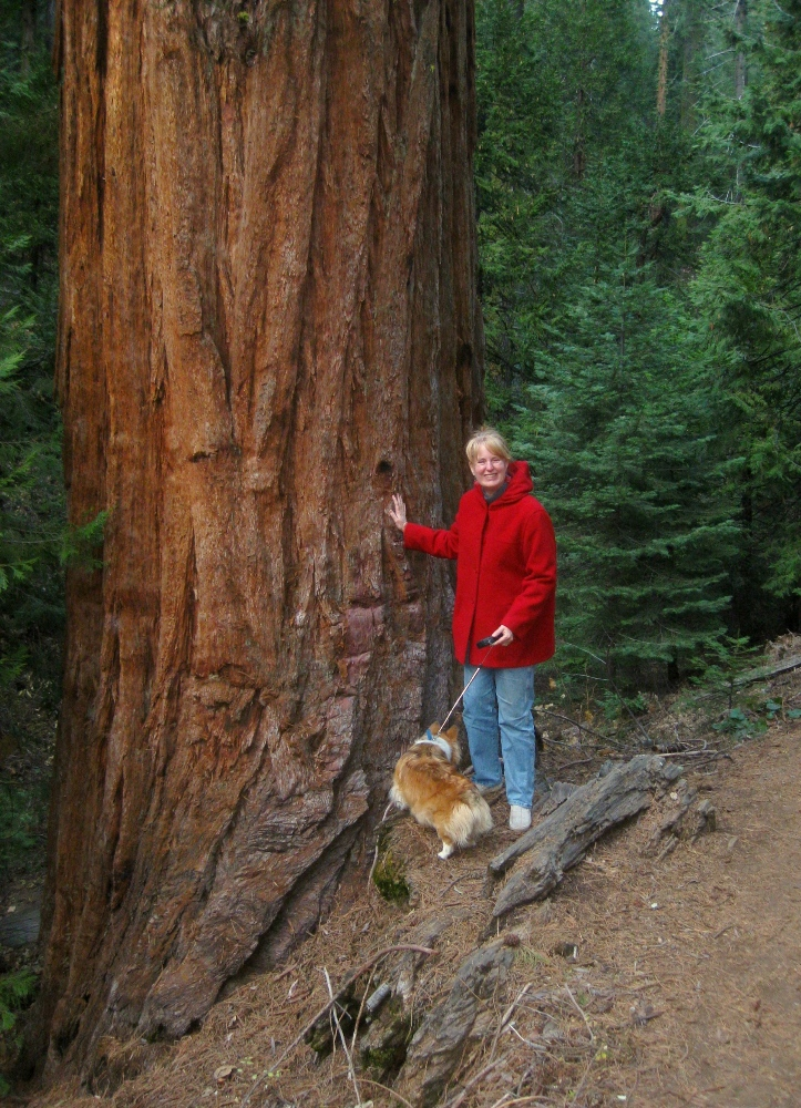 The Giants are Sequoias