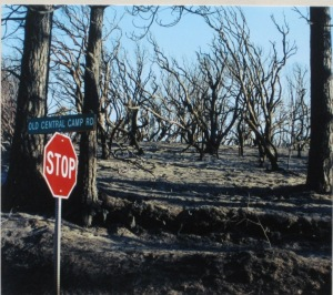This is the forest land just above our home where the fire burned much hotter.  We were fortunately spared this result.
