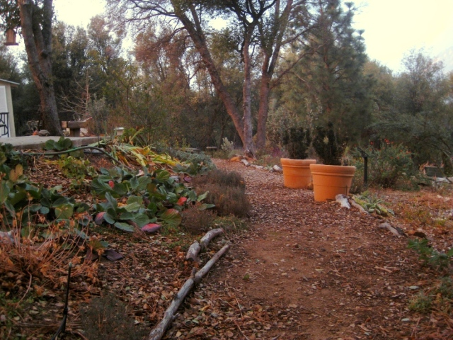 Main garden path running length wise, north to south. Here we're looking north.