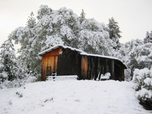 2010-11 The goat shed covered in November snow
